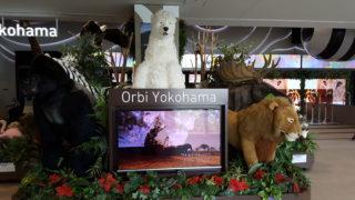子供と体験 !大自然を全身で感じるエンタメミュージアムオービィ横浜(Orbi Yokohama)